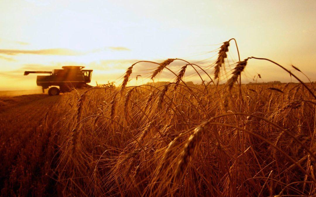 День поля в Сорочинском округе