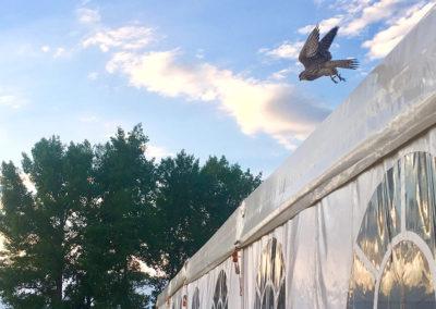 19.07.2019 Tent 15x25 _5